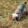 Крейзи Штурман, натаскивание собаки на точки